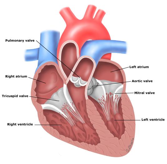 Heart Catheterization Lakewood Asc